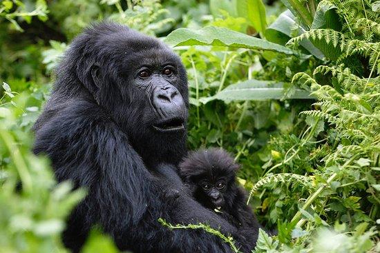 Kigali Province Φωτογραφία