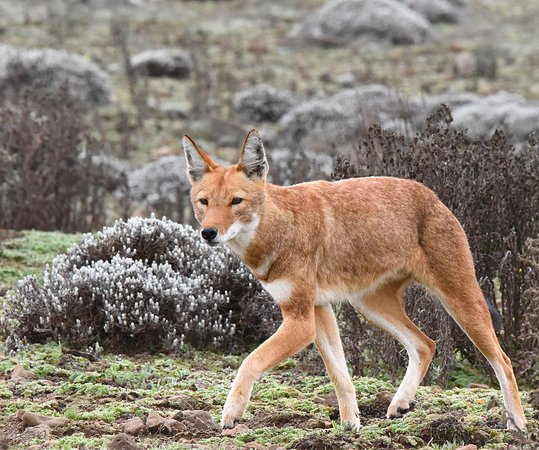 Bale Mountains National Park照片