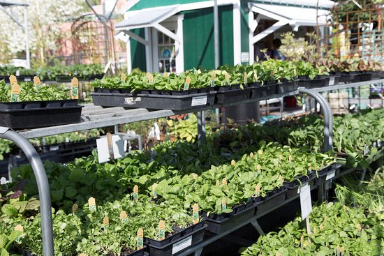 Down To Earth Home Garden Gift Springtime Means A Packed Nursery