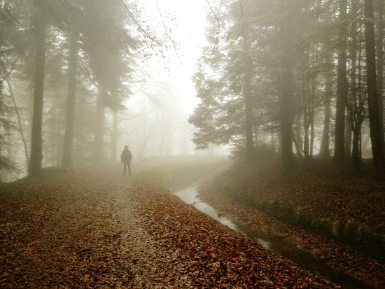 Les Cammazes, France: Mystical misty morning along the canal