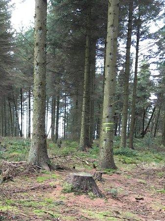Nercwys, UK: Trees