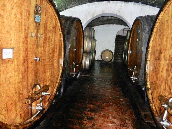 Abbadia di Montepulciano, Italy: Aging barrels