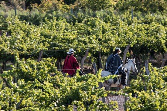 Снимок Cavas Wine Lodge