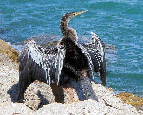 Casey Key, FL: Wildlife