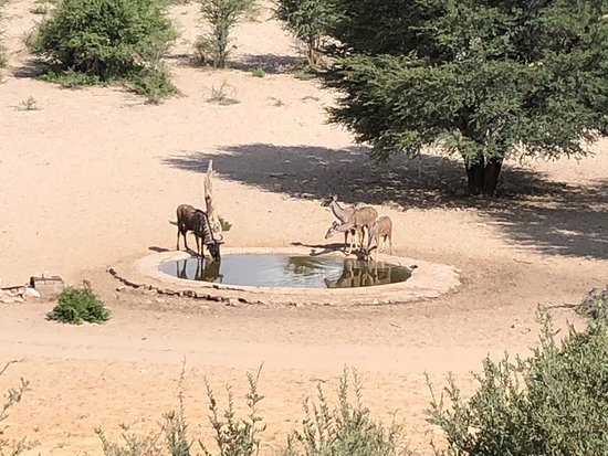 Vryburg, South Africa: the water hole behind the campsite.