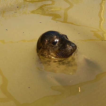 Mablethorpe Seal Sanctuary and Wildlife Centre Photo