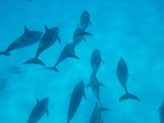 Dolphin House - Sha'ab Samadai Reef: Dolphin house