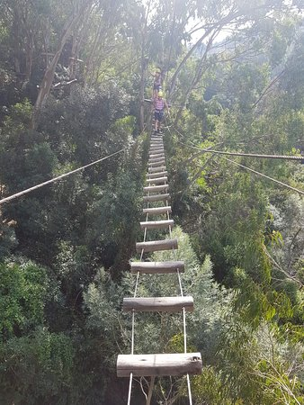 Alpen Park: Arvorismo, ponte