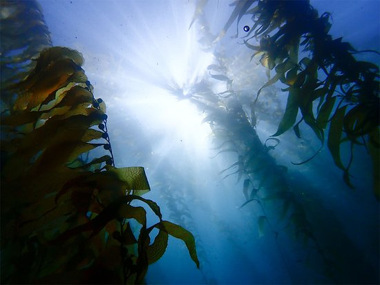 Irvine, Californië: California Kelp Forest