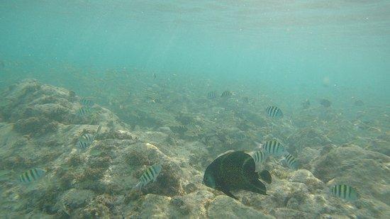 Seabob Aruba: G0154825_large.jpg