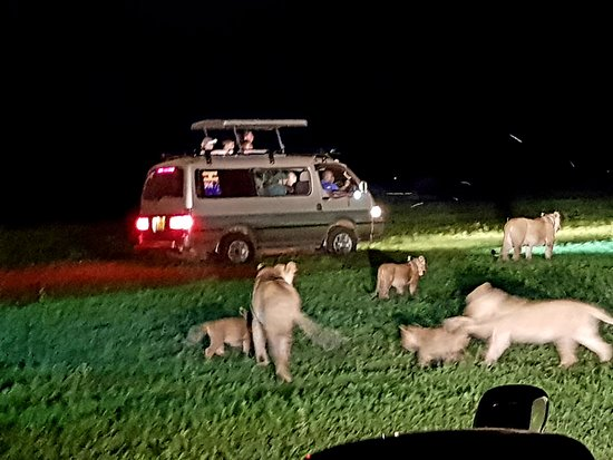 Mukono, Uganda: Night safari, Murchison Nat. Park