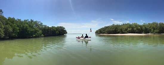 Holbox Island, Mexico: In our Tour Rio Kuka (Mangroves) you can see this kind of beautiful landscapes.