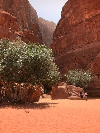 One Day Petra Trip from Eilat Israel: Imagine seeing a flourishing tree in the middle of what seems to be complete desert!