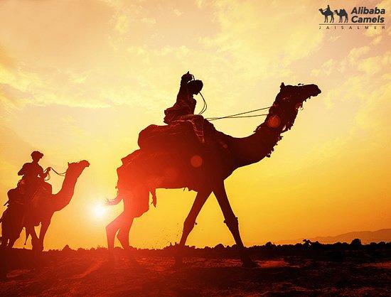 Alibaba Camels