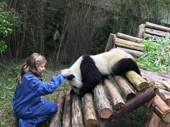 Hold Panda
