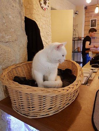 La Compagnie des Chats Photo