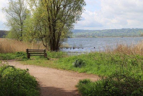 Somerset, UK: Walk at Chew Valley Lake