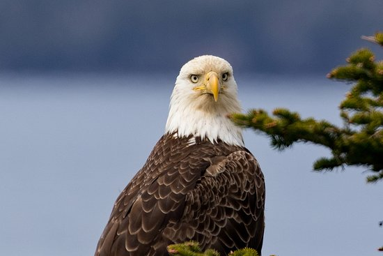 Arnold's Cove, Canada: Overlooking a bird sanctuary, eagles are commonly sited