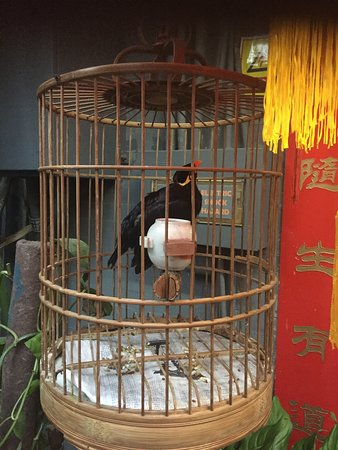Double Happiness Beijing Courtyard Hotel: The chinese speaking birds