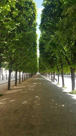 Jardin du Palais Royal: Magnifique écrin !