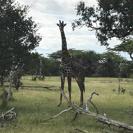Selous Game Reserve, Tanzanya: photo1.jpg