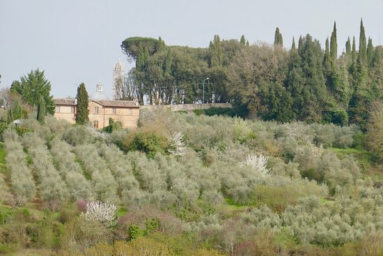 Agriturismo Marciano: View over the top of the hill of the dome and tower of the duomo.