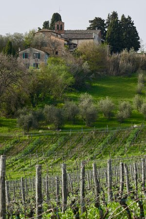 Agriturismo Marciano: Tuscan countryside from near the agriturismo