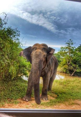 Katunayaka, Sri Lanka: Thank you Sir 💙