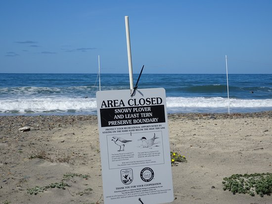 Cardiff State Beach: Restrictions limit access to bird nesting areas