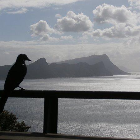Cape Point, جنوب أفريقيا: photo1.jpg