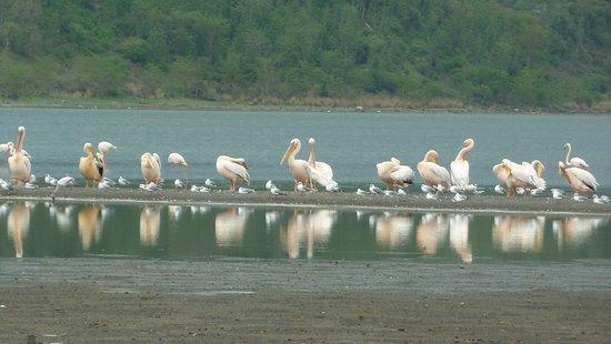 Lake Elementaita Photo