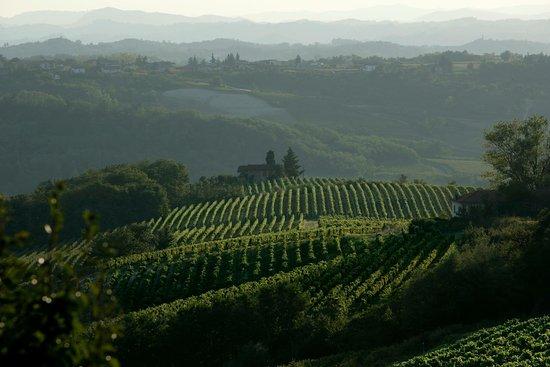 Gavi, Italië: La Scolca