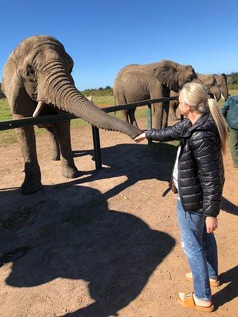 Knysna Elephant Park: lovely experience