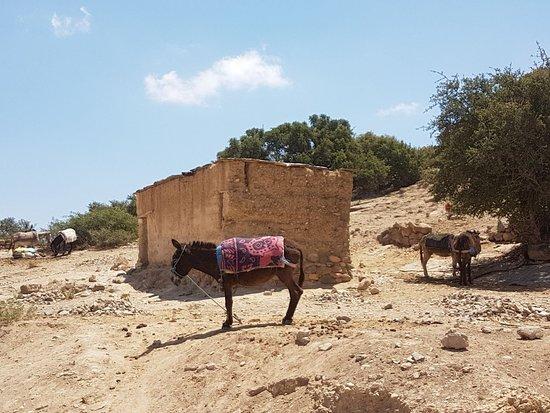 Tiout, Morocco: IMG-20180509-WA0001_large.jpg