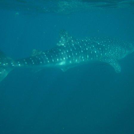 Ningaloo Blue Dive: photo0.jpg