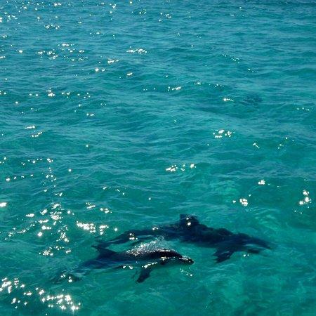 Ningaloo Blue Dive: photo2.jpg