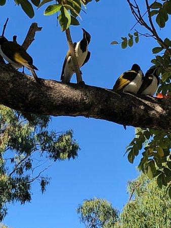 Benaraby, ออสเตรเลีย: photo4.jpg