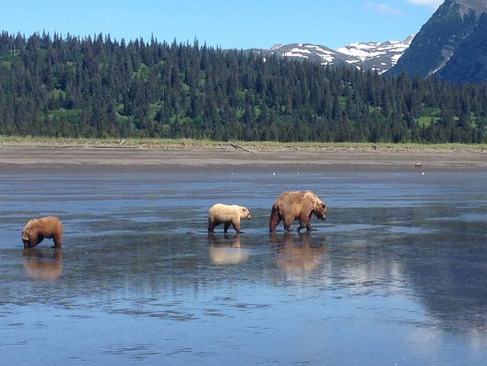 Alaska Bear Expeditions