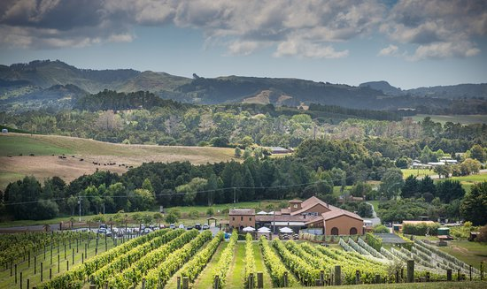Matakana, Nueva Zelanda: Ascension Vineyard