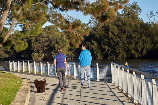 Ascot, Australia: Garvey Park is a great place for on-lead dog walking by the river.