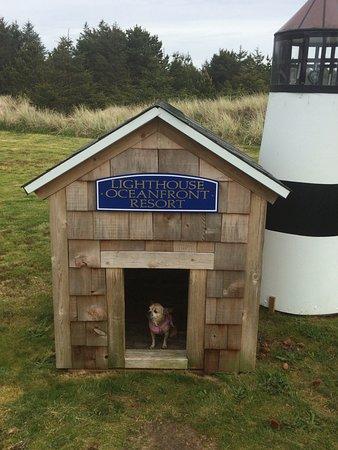 Lighthouse Oceanfront Resort: dog lighthouse