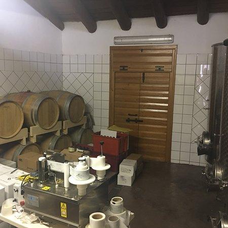 Wine Babos