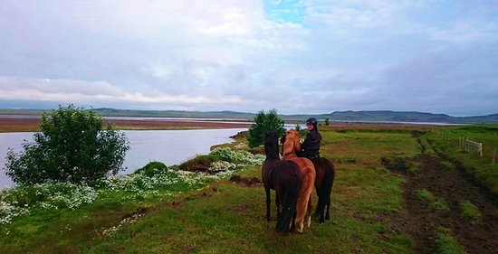 Selfoss, Islande : Experienxe to ride the great icelandic horse! Feel free to contact us bjornjo@vorsabae2.is