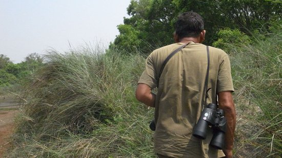 Bardia National Park Foto