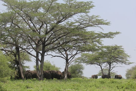 Lindi Region, Tanzania: Elephants in the Selous