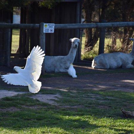 Grantville, Australia: photo5.jpg