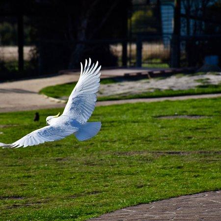 Grantville, Australia: photo6.jpg