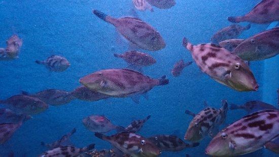Wakkanai City Noshappu Aquarium
