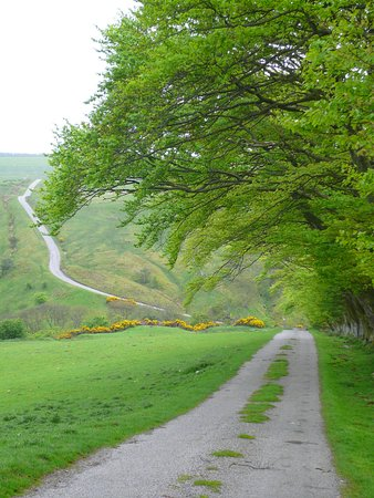 A road well travelled - and should be more - Glorious!  The road North of Westgate-in-Weardale