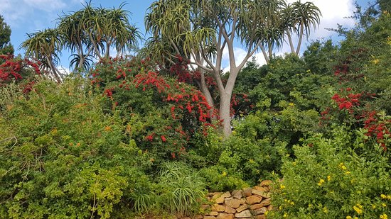 Constantia, South Africa: 20180509_140335_large.jpg